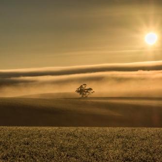 Alone in the Mist - Judy Sara