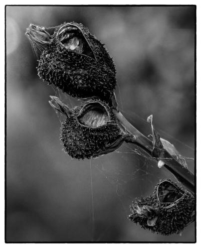 Bird's Head or Seed Pod? - Judy Sara