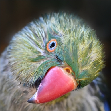 Little Wet Birdie - Helen Whitford