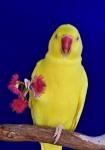 Colour_Helen Whitford_Hello Sunshine_Open