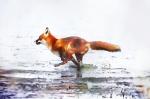 Jamesw Allan –Fox
