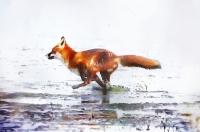 Fox - James Allan