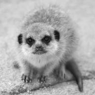 Cutie Pie - Helen Whitford