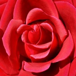 Red Centre - Helen Whitford