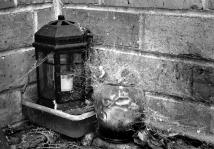 Neglected Corner - Helen Whitford