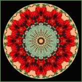 08. Kerry-Malec_Sturt's Desert Peas- Mandala
