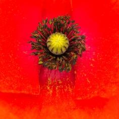 10. Judy Sara - Poppy Pollen