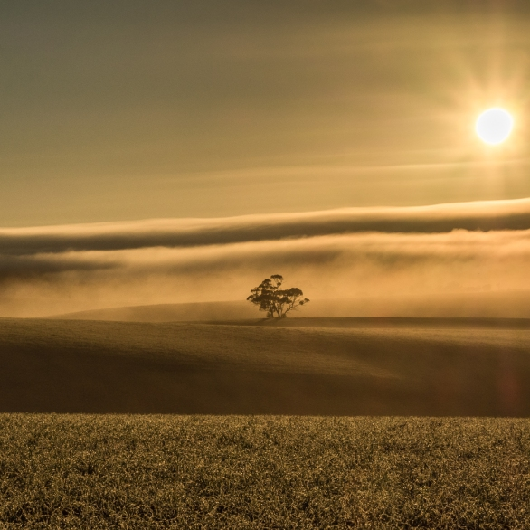 Projected Image 1st - Golden Morning - Judy Sara - Hutt St Photos Award and WEA Landscape Trophy