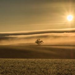 Golden Morning - Judy Sara