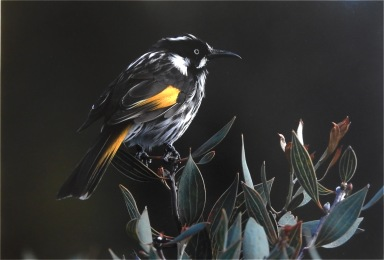 Honeyeater - Bev Langley