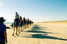 Camel Train - David Hope