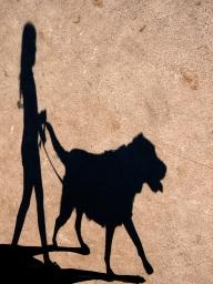Dog Shadow - Jenny Pedlar