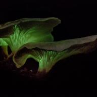 Mushroom - James Allan