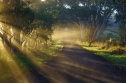 Misty Sunrise in McLaren Vale - Suzie Smith