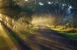 Misty Sunrise in McLaren Vale – SuzieSmith