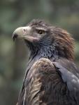 Wipe Your Beak – HelenWhitford