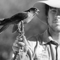 Portrait of a Bird Handler - James Allan