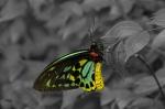Butterfly – KimBrumfield