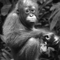 Pensive Look - Helen Whtford