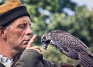 The Falconer - Paul Hughes