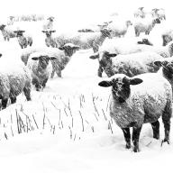 Snowfall at Snowshill - Paul Hughes