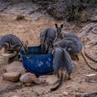 Suzie Smith - Drought relief in Gammon Ranges