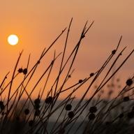 Sheila Gatehouse - Hazy Sunset