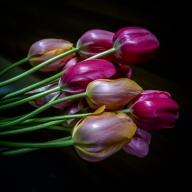 Suzie Smith_Low Key Tulips