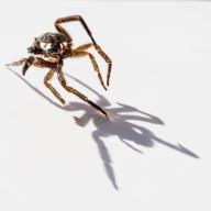 Judy Sara - Exoskeleton