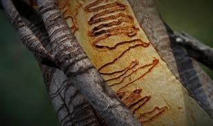 Meredith Retallack - Stop Scribbling