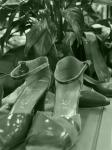 Vicki Kramer_Shoes forSale