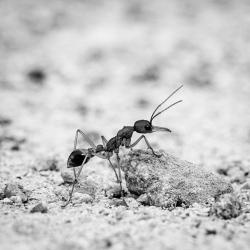Judy Sara_The Ant