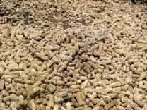Vicki Kramer - Discarded Corn Cobs