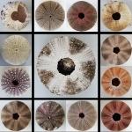 James Allan –Urchins