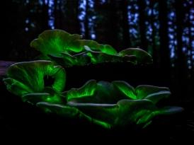 Judy Sara - Ghost Mushrooms