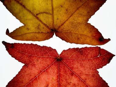 James Allan - Rorschach Leaf Test