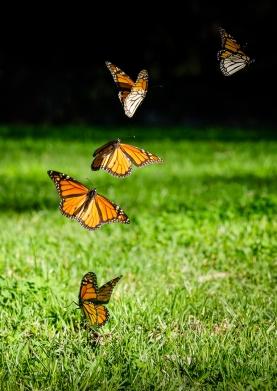 Judy Sara - Flutter By