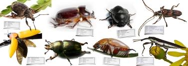 James Allan - No Pins for Beetles